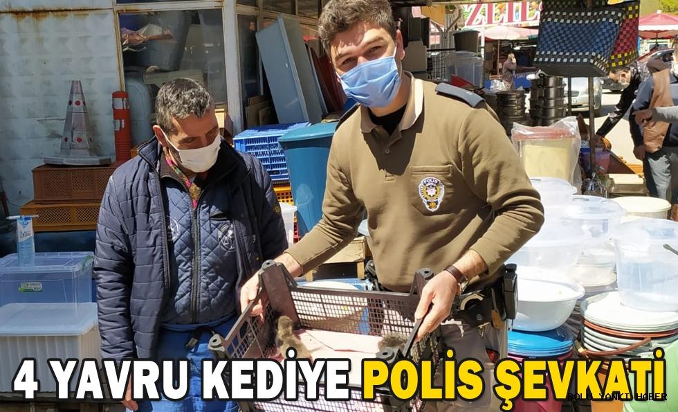 4 YAVRU KEDİYE POLİS ŞEVKATİ