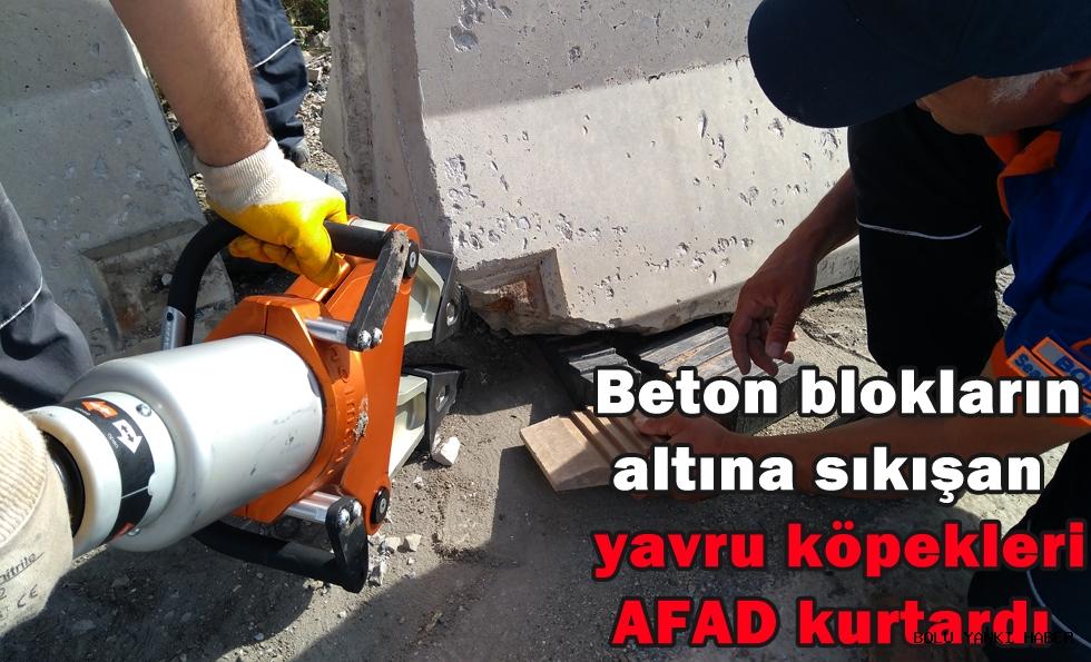 Beton blokların altına sıkışan yavru köpekleri AFAD kurtardı