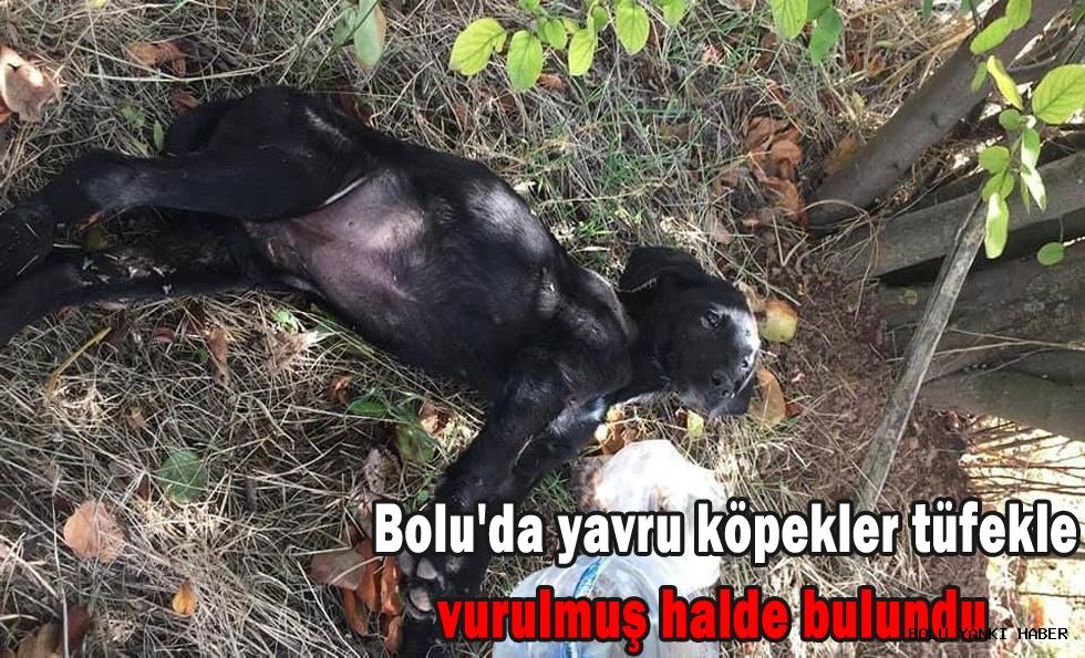 Bolu'da yavru köpekler tüfekle vurulmuş halde bulundu