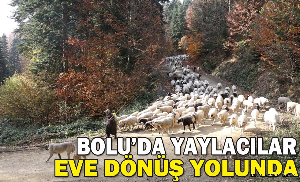 Bolu'da yaylacılar eve dönüş yolunda