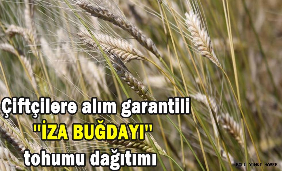 Çiftçilere alım garantili ''İZA BUĞDAYI'' tohumu  dağıtımı