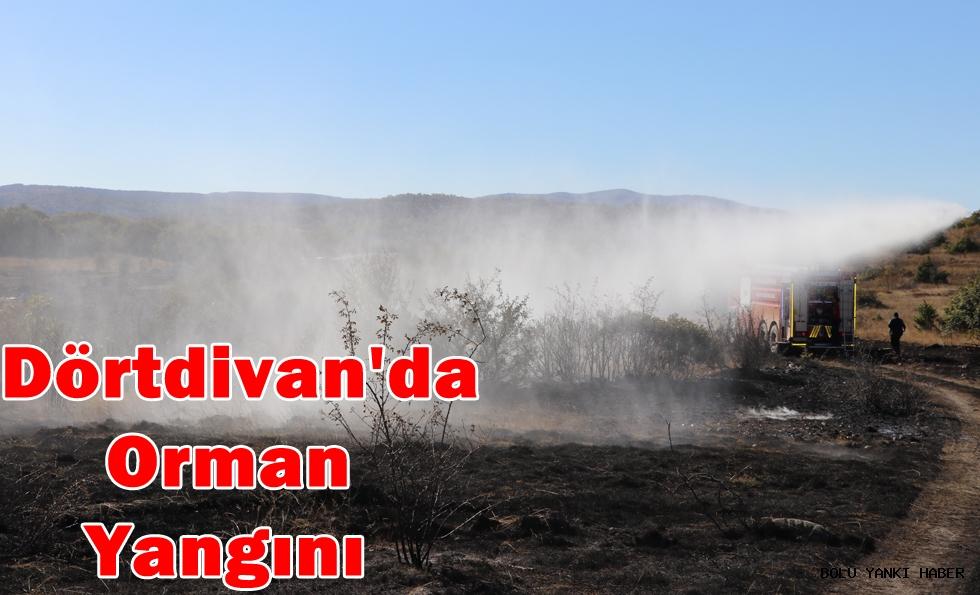Dörtdivan'da Orman Yangını