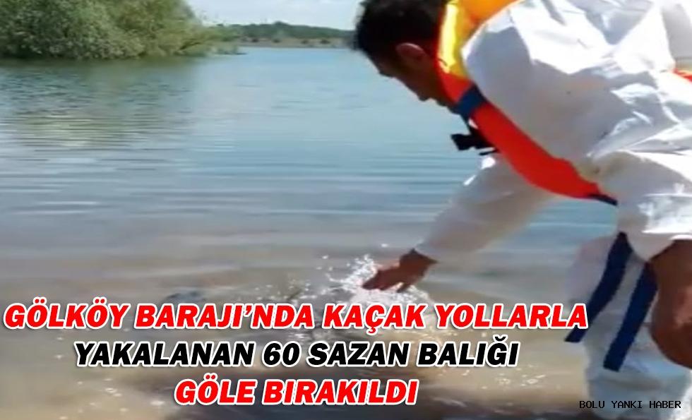 Gölköy Barajı'nda kaçak yollarla yakalanan 60 sazan balığı göle bırakıldı