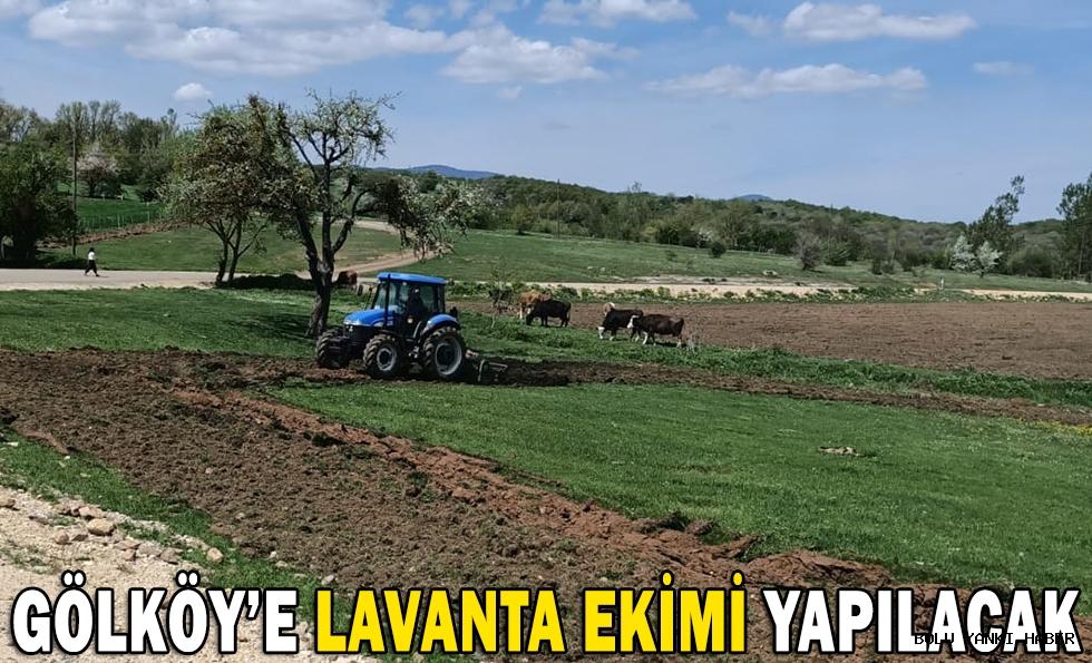GÖLKÖY'E LAVANTA EKİMİ YAPILACAK