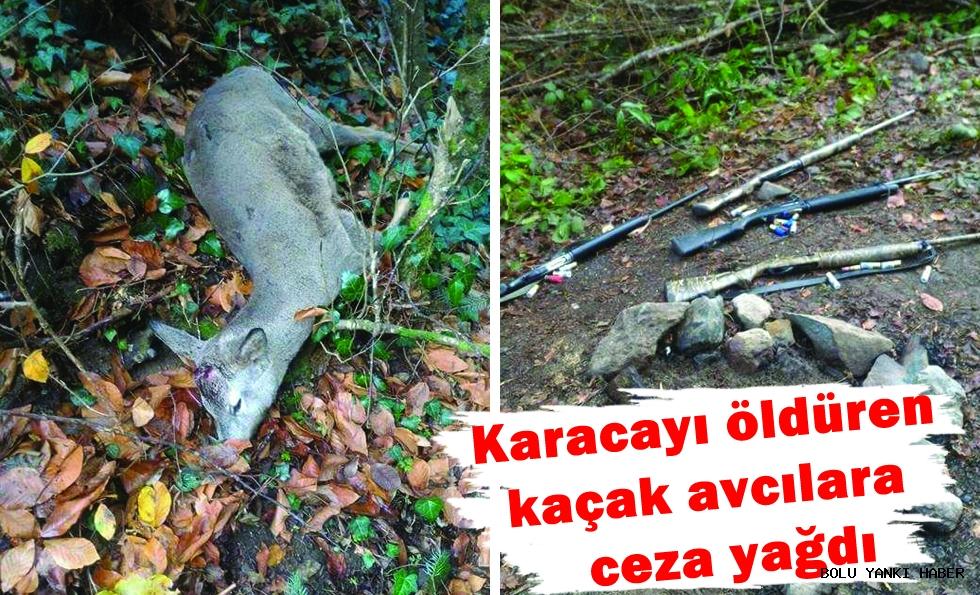 Karacayı öldüren kaçak avcılara 13 bin 500 TL ceza