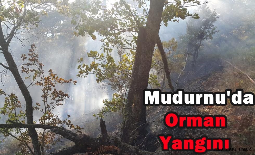Mudurnu'da Orman Yangını