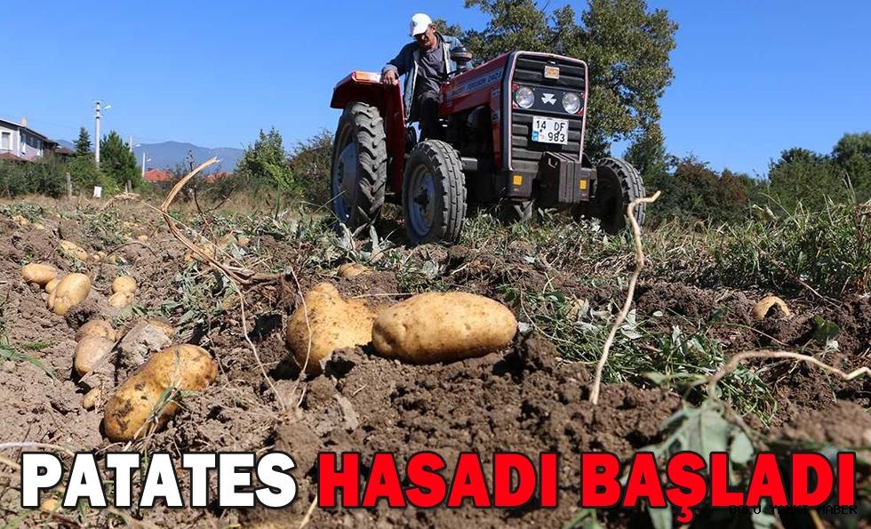 PATATES HASADI BAŞLADI